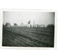 Serres en azalea's bloemisterij Floré, Lochristi, 1940-1955