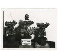 Familie Van Mieghem, Sint-Lievens-Houtem, jaren 1930-1940