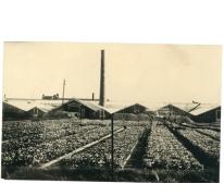 Serres van bloemisterij St.-Fiacre, Destelbergen, begin 1900