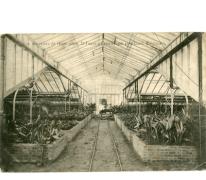 Binnenzicht serre van bloemisterij St.-Fiacre, Destelbergen, jaren 1920