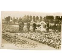 Bezoek Koningspaar aan de Begoniavelden De Sommer, Hijfte, 1929